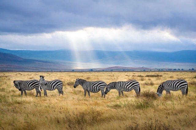 visiter la Tanzanie en 7 jours